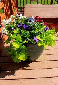 Creating an Outdoor Oasis With Potted Plants - Wind River Realty